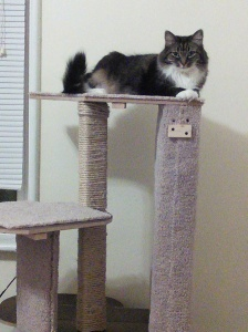 Isabella & her new treehouse